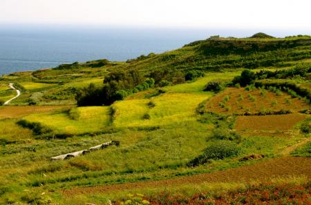 Gozo green countryside