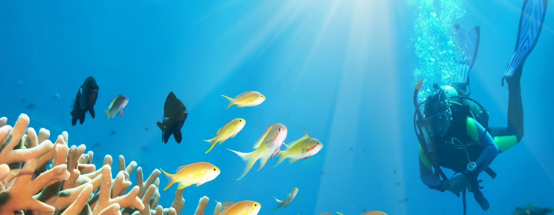 top-dive-sites-in-gozo