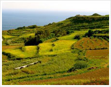 Green Gozo